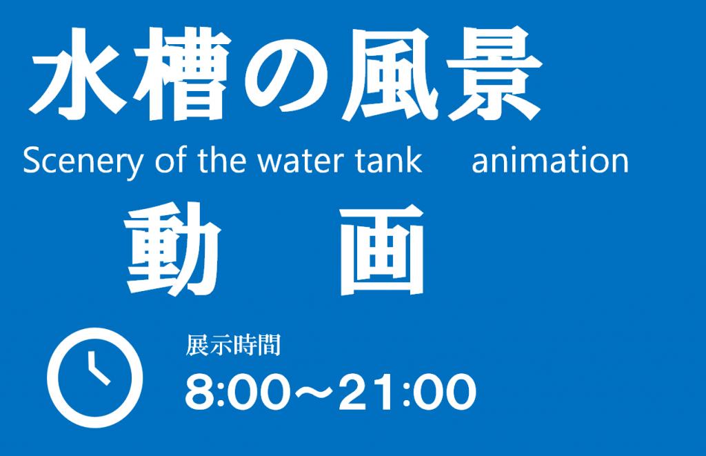水槽の動画紹介